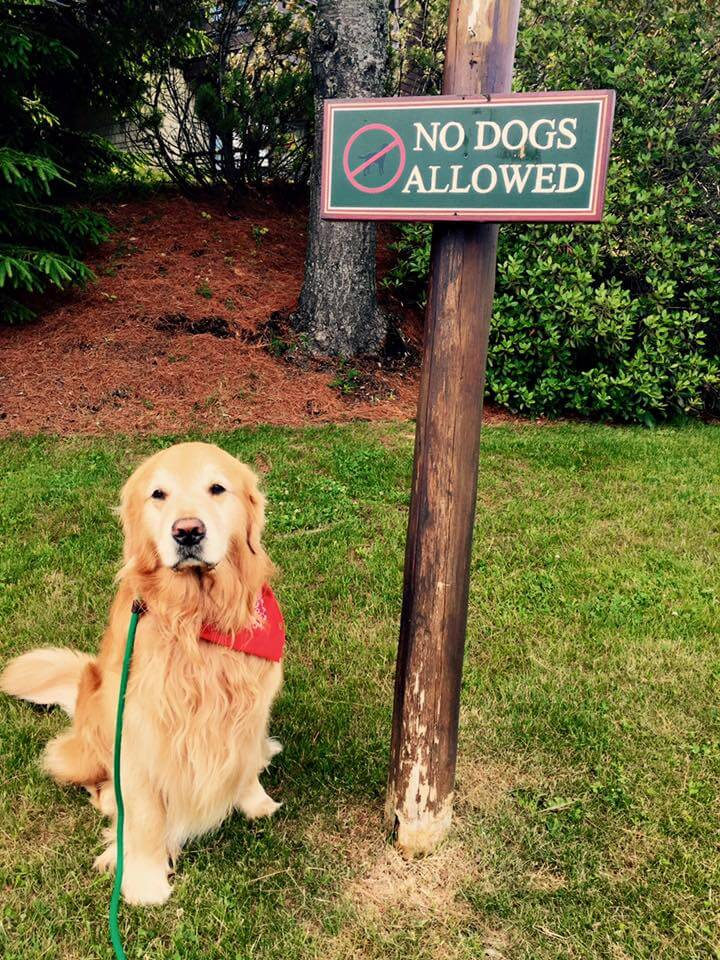 Dogs cant read